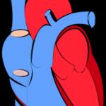 EDと心臓病